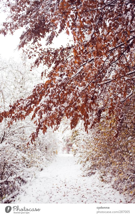 Nature Beautiful Tree Red Loneliness Calm Winter Landscape Forest Environment Cold Autumn Life Snow Lanes & trails Dream
