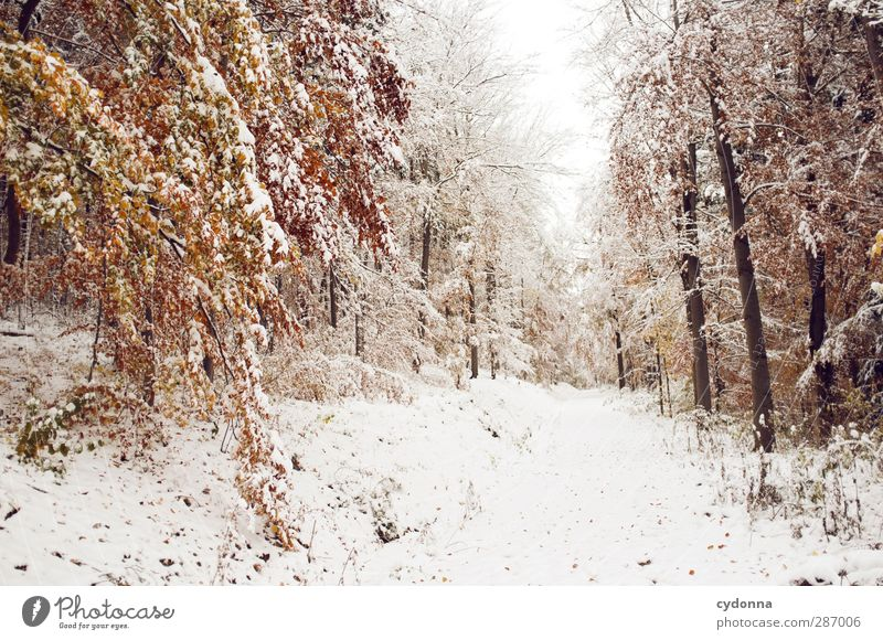 Warm thoughts Environment Nature Landscape Autumn Winter Climate Climate change Ice Frost Snow Tree Forest Esthetic Loneliness Uniqueness Experience Idyll Cold