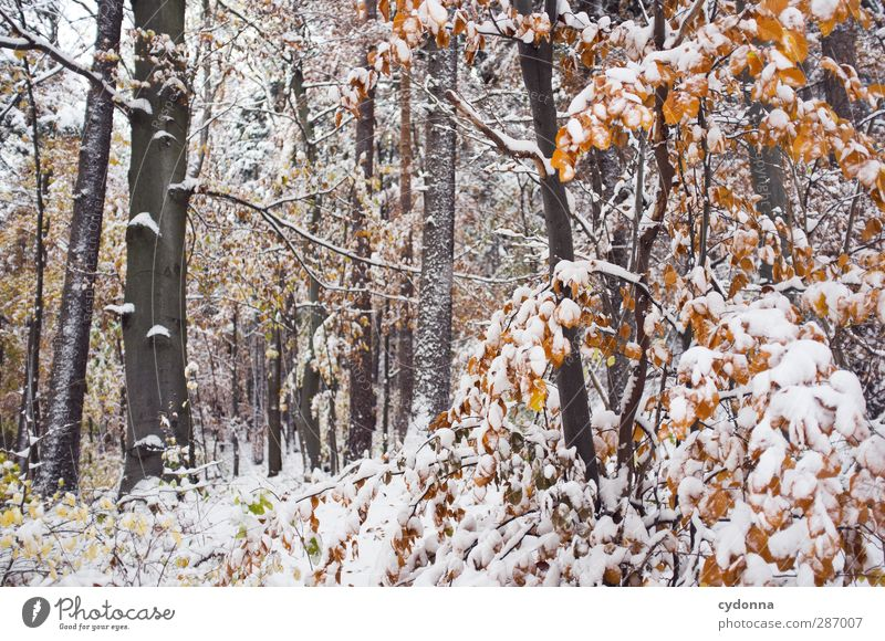 woodland Environment Nature Autumn Winter Climate Climate change Ice Frost Snow Tree Forest Esthetic Loneliness Uniqueness Discover Idyll Cold Life Calm