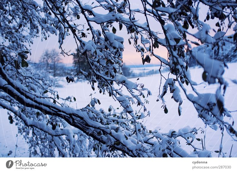 cold snap Environment Nature Landscape Sunrise Sunset Winter Climate Climate change Ice Frost Snow Tree Meadow Esthetic Loneliness Uniqueness Horizon Idyll Cold
