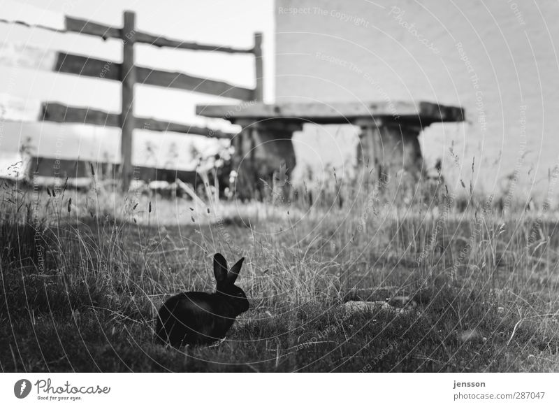 What does the Easter Bunny actually do in summer? Environment Nature Animal Grass Garden Meadow Pet Hare & Rabbit & Bunny 1 Relaxation To feed To enjoy Crouch