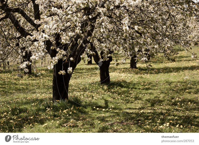 Green Tree Sun Joy Calm Yellow Meadow Warmth Spring Happy Blossom Garden Bright Moody Contentment Happiness