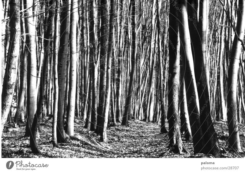 Tree Empty