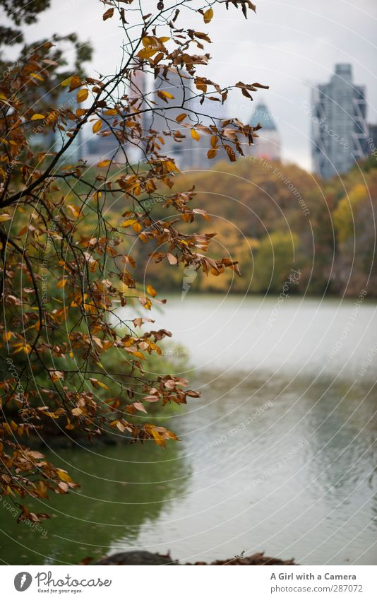 In the park Autumn Tree Leaf New York City Town Downtown Skyline House (Residential Structure) Happiness Multicoloured Lakeside Pond Subdued colour