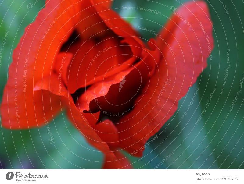 Nature Summer Plant Colour Green Red Flower Leaf Life Environment Blossom Spring Natural Garden Design Park