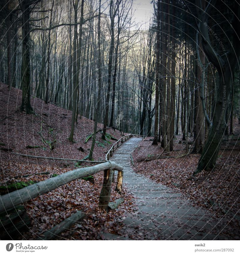 Nature Plant Tree Leaf Calm Landscape Forest Environment Dark Autumn Lanes & trails Wood Natural Weather Climate Stairs
