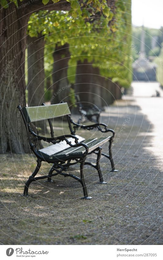 Summer in the park Beautiful weather Plant Tree Park Stone Wood Metal Esthetic Gray Green Park bench Free Appealing Seating Avenue Row of trees Graveled