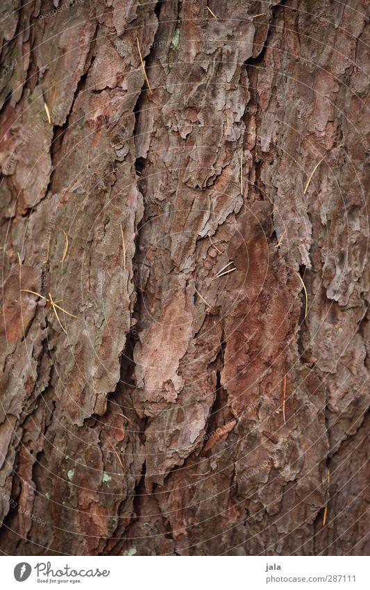 Nature Plant Tree Environment Brown Natural Tree trunk Tree bark Pine