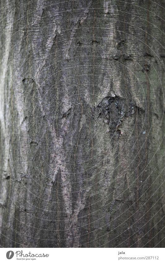 Nature Plant Tree Environment Wood Brown Natural Tree trunk Tree bark Grove birch