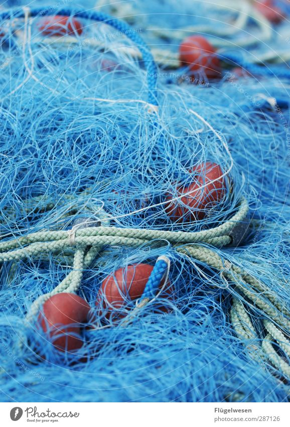 Safe in the net! Food Fish Seafood Nutrition Eating Breakfast Waves Coast Lakeside River bank North Sea Baltic Sea Ocean Pond Catch Might Determination