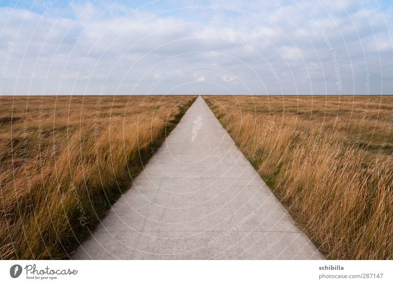 Free path in the salt marshes Relaxation Far-off places Freedom Cycling tour Nature Landscape Horizon Meadow North Sea Lanes & trails Line Hiking Gap Disperse
