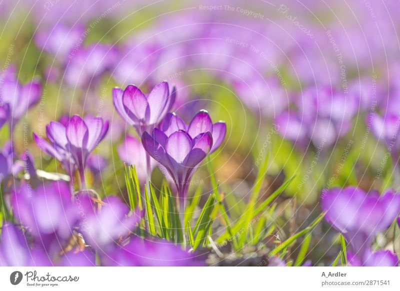 Nature Plant Beautiful Green Relaxation Leaf Blossom Spring Meadow Grass Garden Pink Park Fresh Earth Happiness