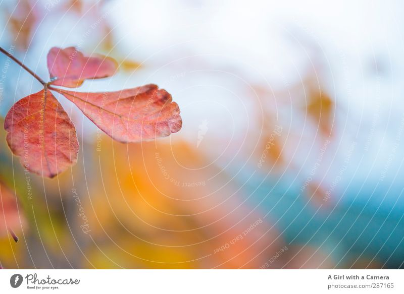 Nature Plant Leaf Forest Environment Autumn Park Transience Indian Summer
