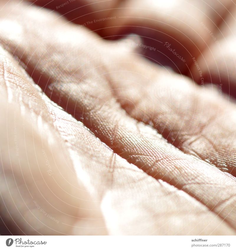 Human being Hand Skin Authentic Fingers Future Uniqueness Wrinkle Wrinkles Palm of the hand Water ditch Fortune-telling Life line