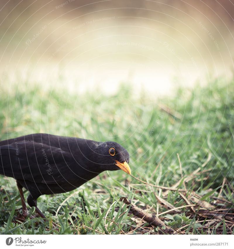 Nature Green Animal Black Environment Meadow Grass Funny Small Bird Natural Wild animal Authentic Feather Curiosity Animalistic