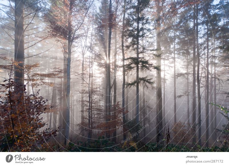 manifestation Adventure Environment Nature Landscape Elements Summer Autumn Climate Fog Forest Sign Exceptional Cold Beautiful Moody Beginning Life Change