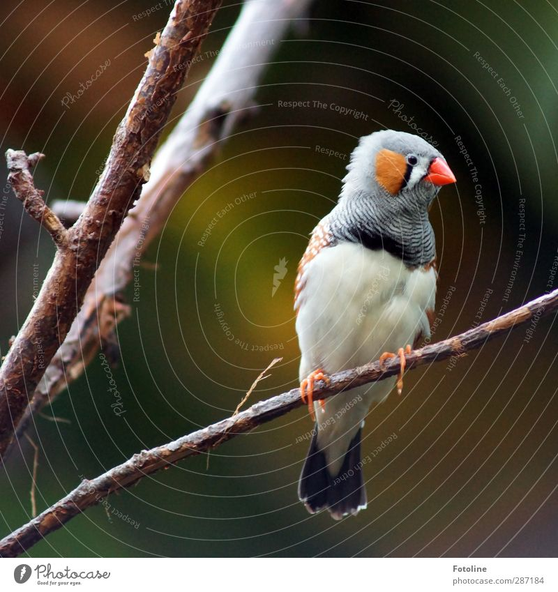 Huh? What's going on??? Environment Nature Plant Animal Tree Bird Animal face Claw Bright Small Near Natural Zebra Finch Beak Feather Branch Twig Multicoloured