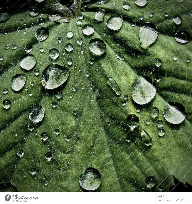 Nature Green Beautiful Plant Leaf Calm Environment Small Natural Rain Glittering Climate Wet Fresh Idyll Beautiful weather