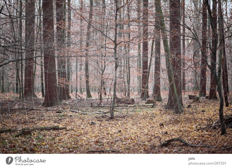 In between Environment Nature Landscape Plant Autumn Tree Bushes Forest Natural Brown Leaf Branchage Colour photo Exterior shot Deserted Day