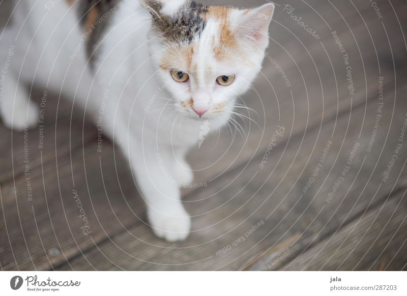 neighbor's little mauz Animal Pet Cat 1 Baby animal lucky cat Colour photo Exterior shot Deserted Copy Space right Neutral Background Day Animal portrait