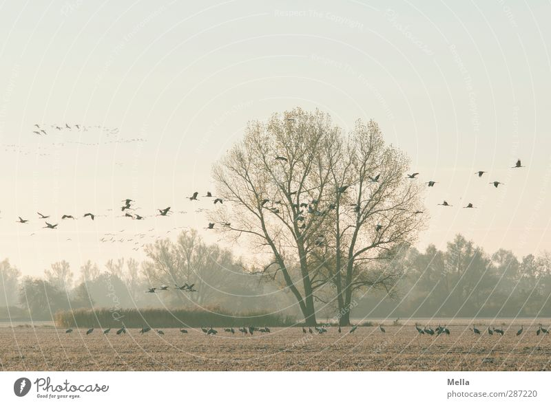 Nature Plant Tree Animal Winter Landscape Environment Cold Autumn Freedom Bird Together Natural Flying Field
