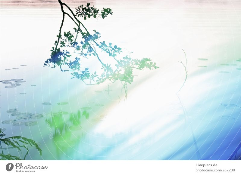 there branch Art Artist Painter Environment Nature Landscape Water Summer Plant Tree Leaf Wild plant Lakeside Illuminate Blue Green Light painting Colour photo