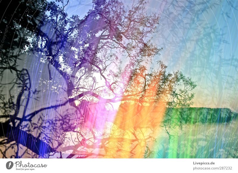 colour play Art Artist Painter Environment Nature Landscape Plant Sky Cloudless sky Sun Sunrise Sunset Sunlight Summer Beautiful weather Tree Leaf Wild plant