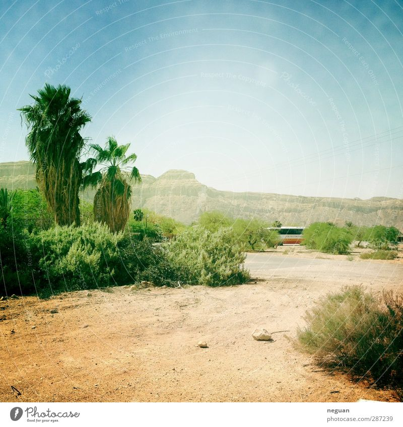 living in the negev #3 Nature Blue Vacation & Travel Green Summer Plant Tree Sun Joy Landscape Yellow Environment Mountain Sand Earth Authentic