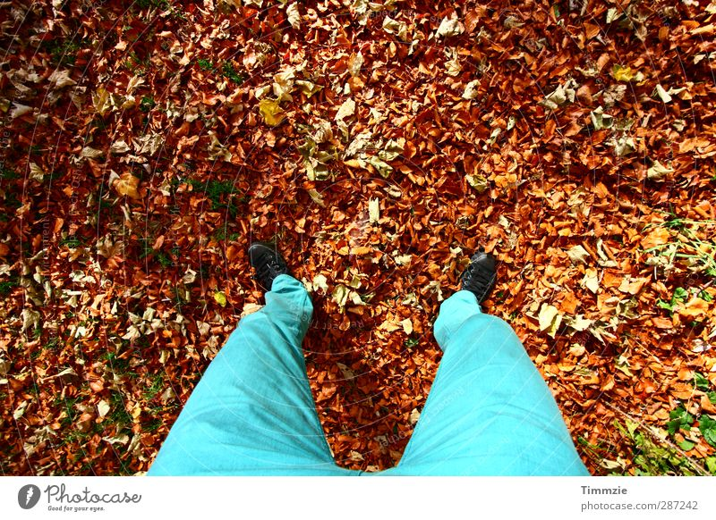 autumn Hiking Legs Feet 1 Human being Environment Nature Earth Autumn Leaf Park Forest Pants Stand Esthetic Turquoise Happy Contentment Calm Colour photo