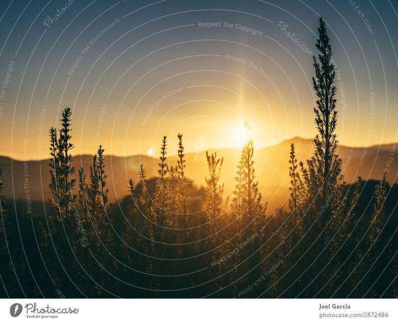 Empyrean Art Environment Nature Landscape Plant Elements Earth Air Sky Cloudless sky Horizon Sun Sunrise Sunset Sunlight Spring Summer Beautiful weather Grass