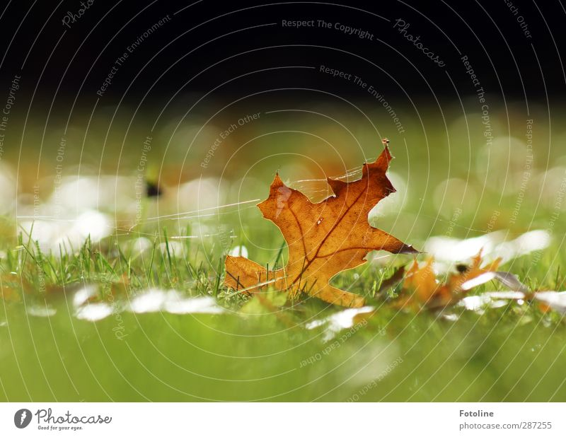 Autumn under control Environment Nature Plant Grass Leaf Garden Park Meadow Bright Near Natural Brown Green Autumnal Autumn leaves Spider's web Colour photo