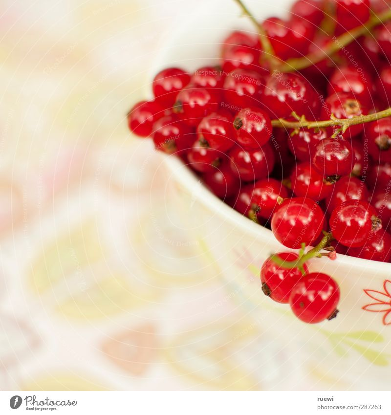 Nature White Summer Plant Red Animal Environment Life Healthy Healthy Eating Fruit Food Fresh Nutrition Bushes Kitchen