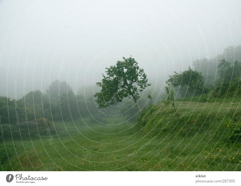 fog Landscape Bad weather Fog Rain Tree Bushes Agricultural crop Field Sadness Cry Wild Green Serene Patient Calm Distress Nerviness Beautiful Colour photo
