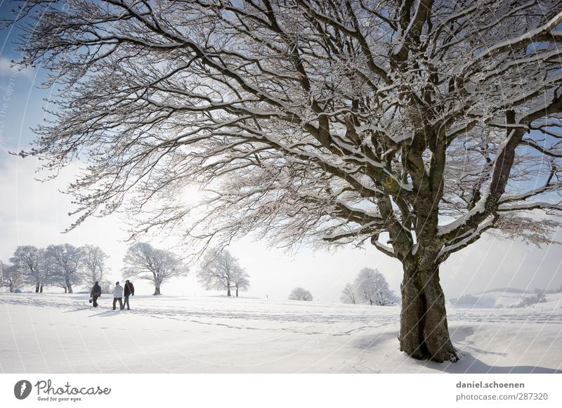 Human being Blue Vacation & Travel White Tree Joy Winter Mountain Snow Bright Ice Climate Hiking Tourism Beautiful weather Trip