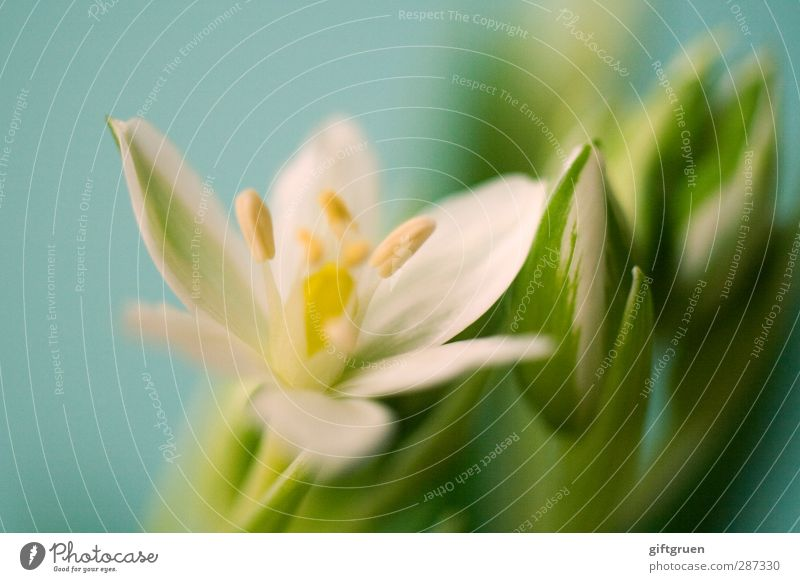 Happy birthday, Photocase! Plant Flower Leaf Blossom Blossoming Spring Spring flower Pistil Part of the plant Botany Biology Nature Environment Bud
