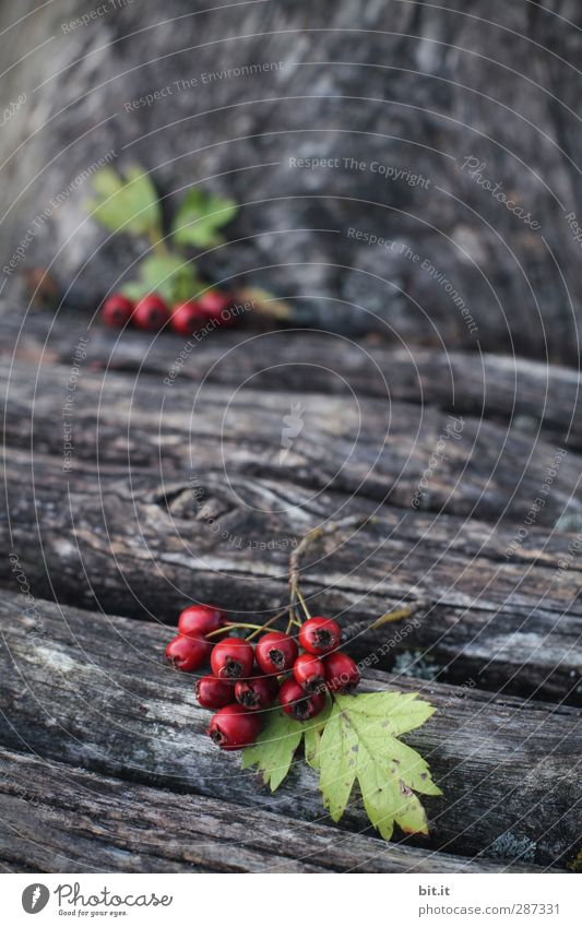 HAPPY BIRTHDAY - you are in the foreground today Nature Autumn Plant Tree Leaf Garden Lie Round Juicy Green Red Wood Wooden board Wooden wall Tree trunk Berries