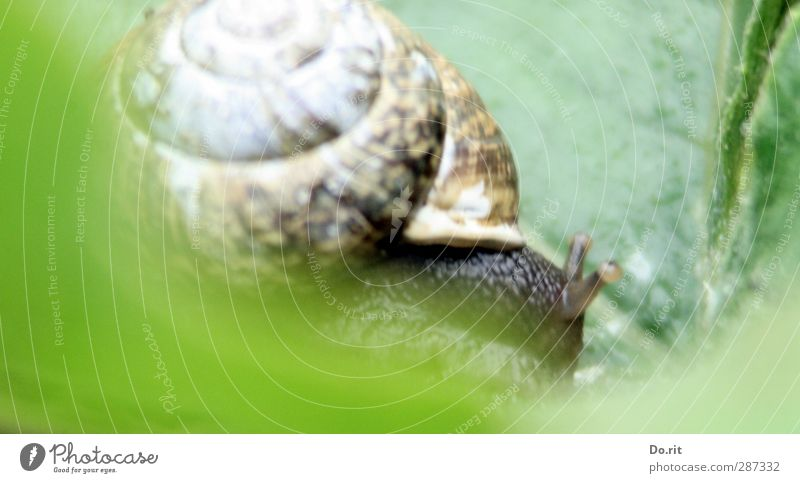 Happy birthday photocase | Snail pace Animal Wild animal Vineyard snail 1 Strong Soft Brown Green Diligent Disciplined Slowly Slimy Creep Colour photo