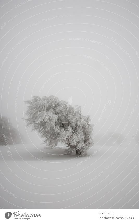 Winter // Happy Birthday photocase! Nature Landscape Weather Bad weather Fog Ice Frost Snow Snowfall Tree Field Cold White Calm Loneliness Idyll Sustainability