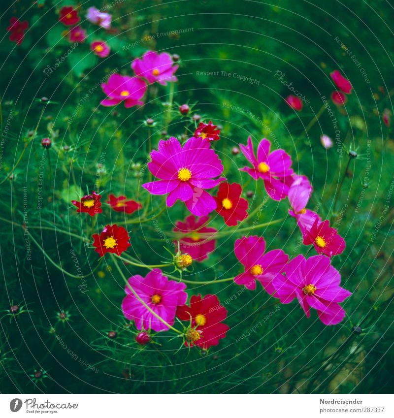 Nature Summer Plant Colour Flower Blossom Garden Growth Elegant Fresh Happiness Friendliness Blossoming Fragrance Exotic Gardening