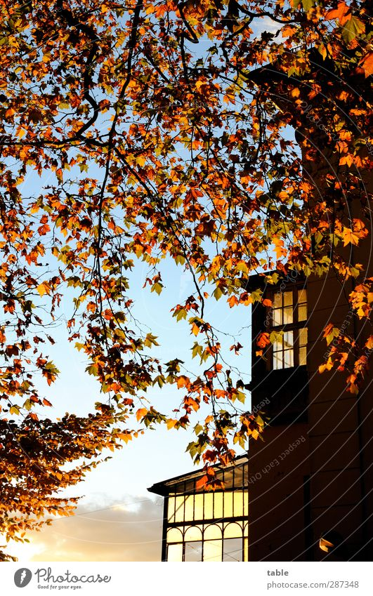 Sky Nature Blue Old Plant Tree Calm Black House (Residential Structure) Yellow Environment Window Dark Wall (building) Autumn Berlin