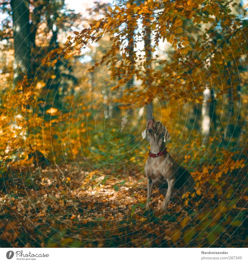 Dog Nature Animal Landscape Relaxation Forest Autumn Moody Weather Sit Beautiful weather Esthetic Cool (slang) Fitness Trust Athletic