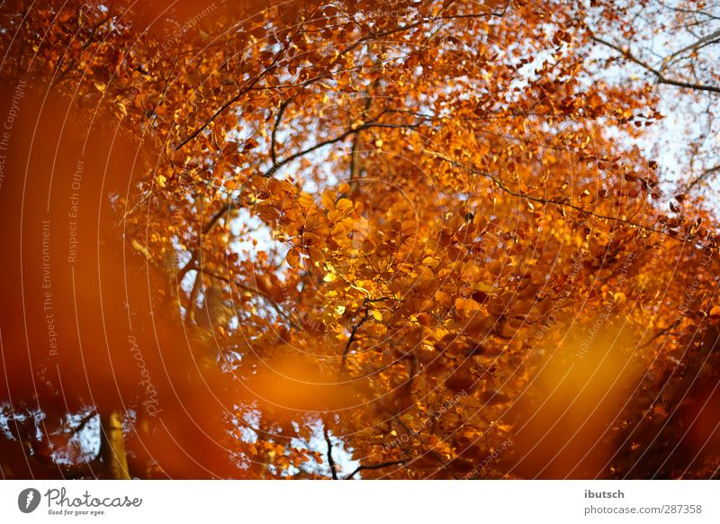 Autumn in Frankfurt Nature Plant Fire Sky Sunrise Sunset Sunlight Weather Beautiful weather Tree Leaf Garden Park Forest Town Deserted Emotions Happy