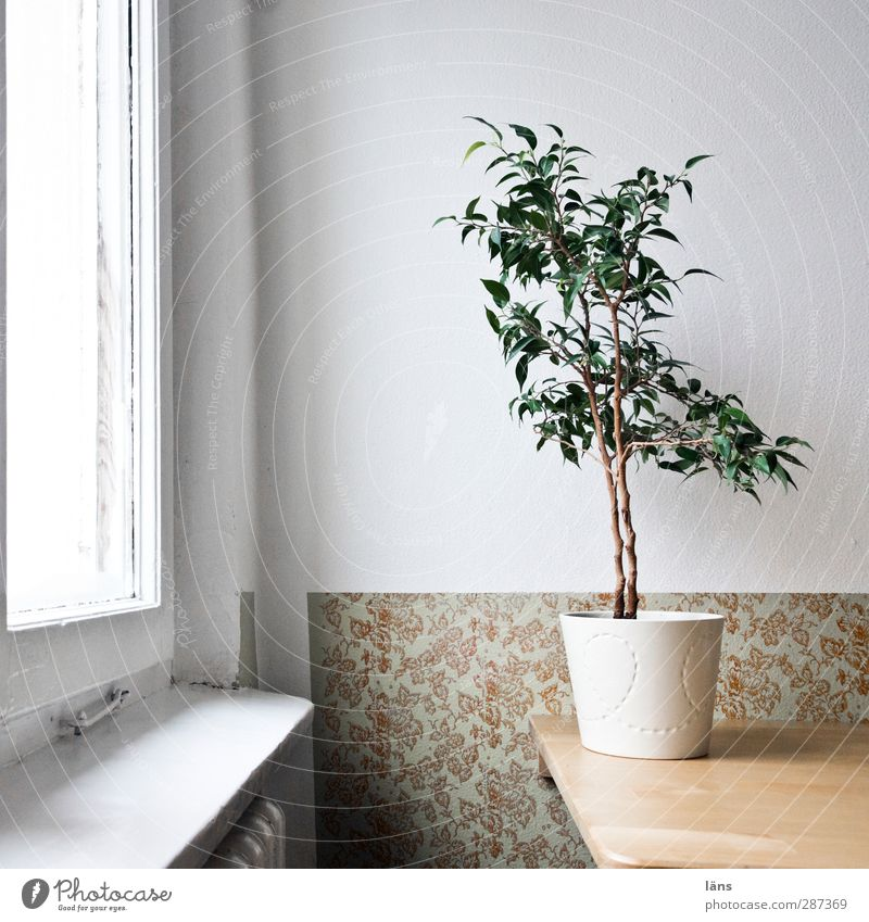 Vacation & Travel Plant House (Residential Structure) Window Wall (building) Wall (barrier) Interior design Bright Room Flat (apartment) Tourism Living or residing Decoration Table Simple Wallpaper