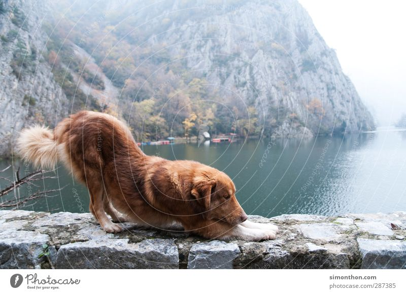 Dog Nature Vacation & Travel Beautiful Animal Winter Far-off places Environment Mountain Autumn Freedom Wall (barrier) Lake Rock Fog Island