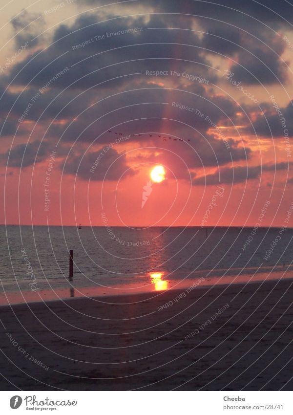 Sun Ocean Beach Clouds Sand Bird Pink Pole Netherlands
