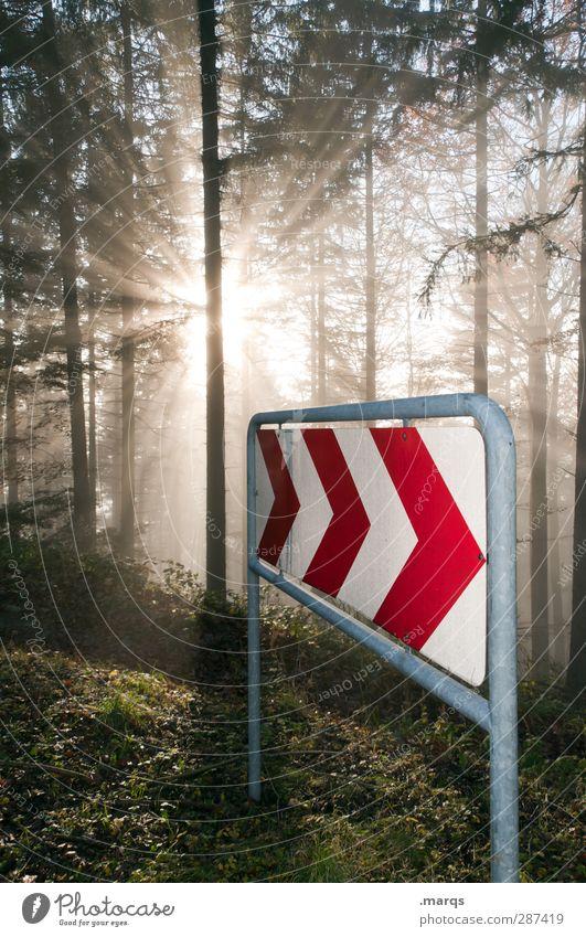restart Environment Nature Sun Climate Climate change Fog Tree Forest Road sign Sign Arrow Illuminate Beautiful Beginning Transience Future Direction Sunbeam
