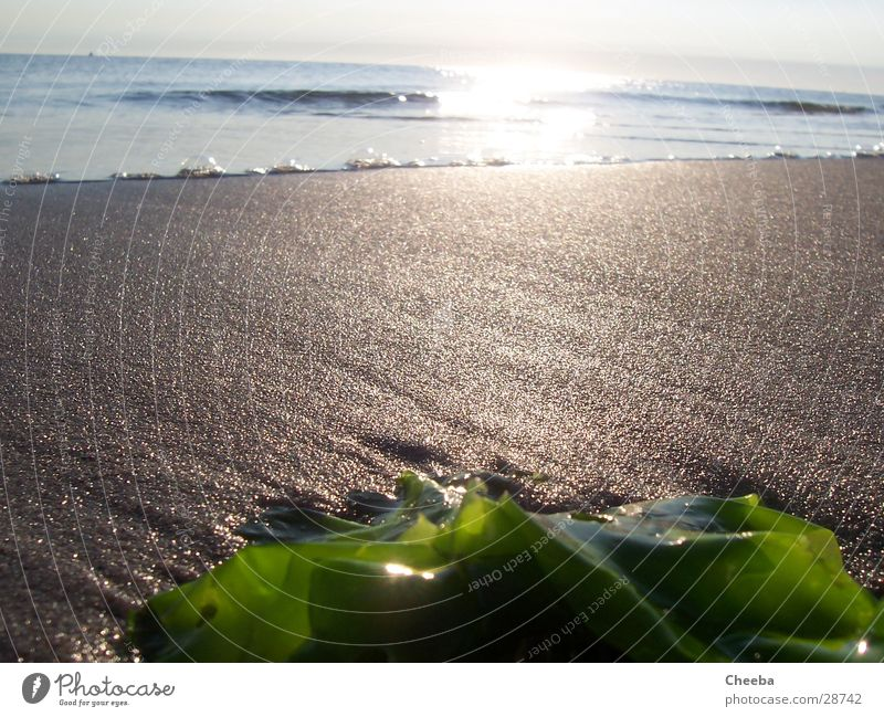 Rockanje Beach Ocean Algae Low tide Netherlands Sand Sun