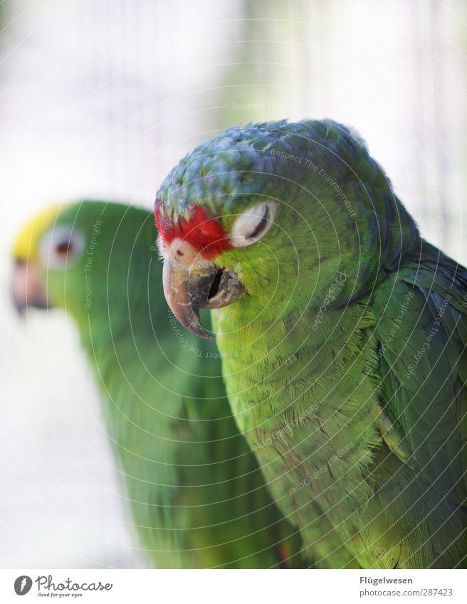 Nature Plant Animal Environment Bird Wild animal Sex Joie de vivre (Vitality) To hold on Fatigue Pet Zoo Farm animal Illness Parrots Oversleep