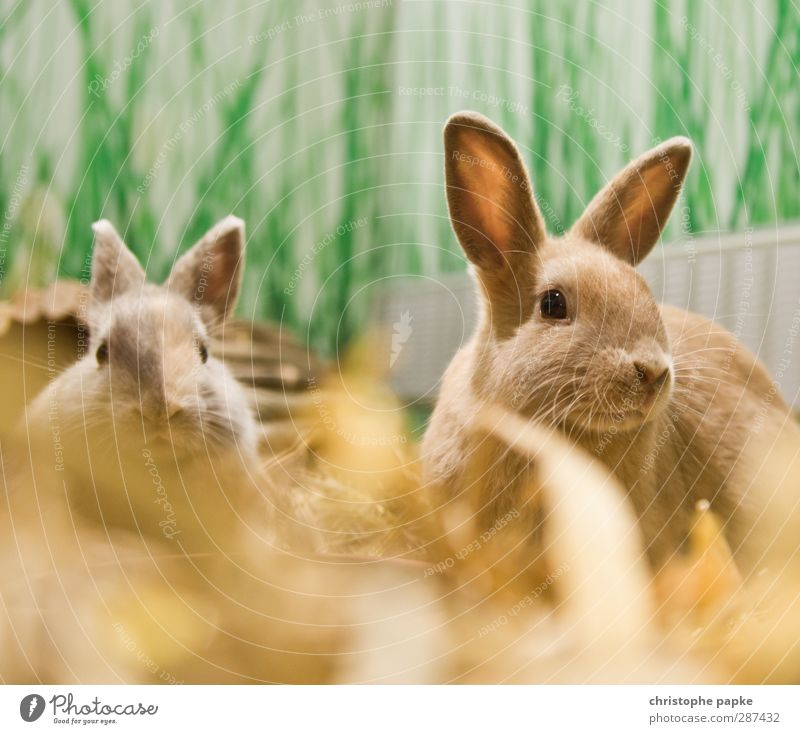 Animal Together Pair of animals Cute Friendliness Curiosity Pelt Listening Watchfulness Pet Odor To feed Hare & Rabbit & Bunny Cuddly Spring fever Attentive