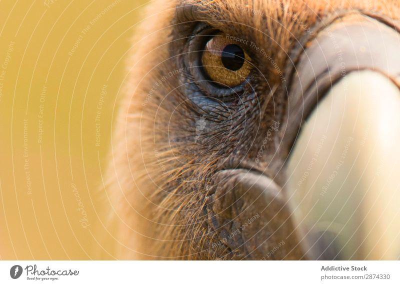 Eye and beak of vulture Eagle Beak Eyes Anger Macro (Extreme close-up) Bird Nature Wild Animal wildlife Feather Hawk Looking Wing predator Speed Head raptor